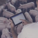 Cargill Invests in Brazilian Swine Farm Management Software Agriness