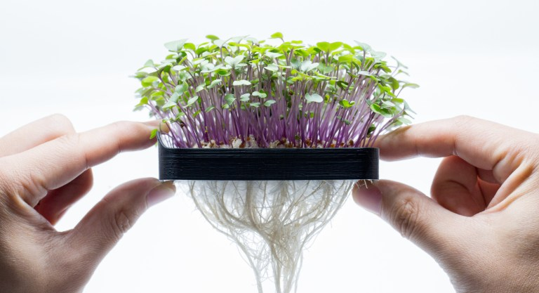 sprout accelerator