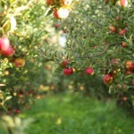 AgriFood Tech Startup Spotlight: FruitSpec