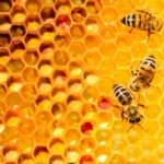 ApisProtect Raises $1.8m Seed Funding to Monitor Bees with IoT