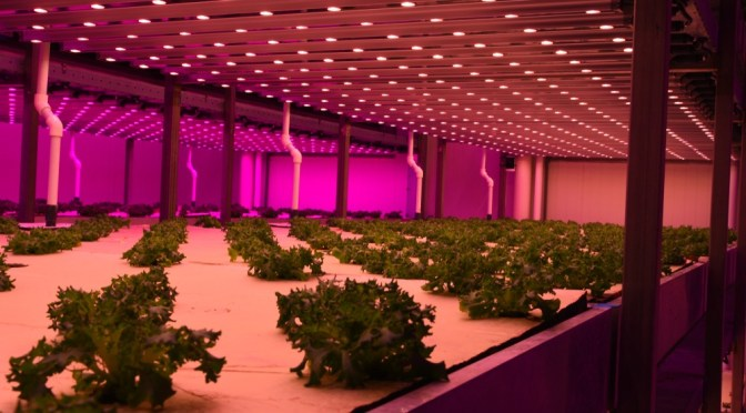 What Do Investors Need to Know About the Future of LED Grow Light Technology?
