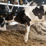 Merck Acquires Digital Livestock Tech Antelliq for $2.4bn in Biggest Agtech Acquisition on Record