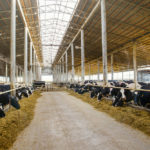 California Awards $90m Grant Funding to Dairy Tech CalBio in Mission to Reduce State's Livestock Emissions