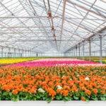 Agrilyst Raises $8m Series A, Rebrands to Artemis, Sets Sights on Enterprise-Level Indoor Farms