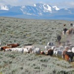 Montana Ranchers Can Now Get Paid to Sequester Carbon Using Rotational Grazing Practices
