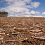 Corporate Inaction on Deforestation Amounts to $30bn in Losses – and Counting – new report