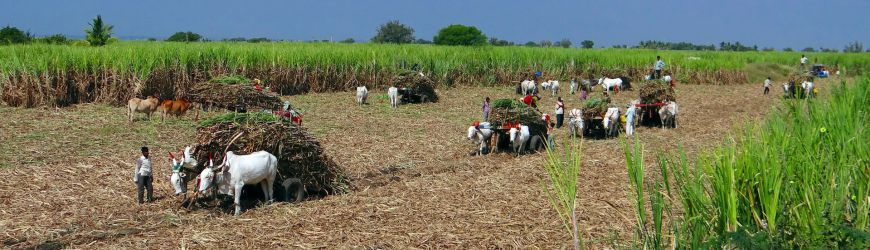 Sugar cane farming with AggreBind soil stabilization and dust control