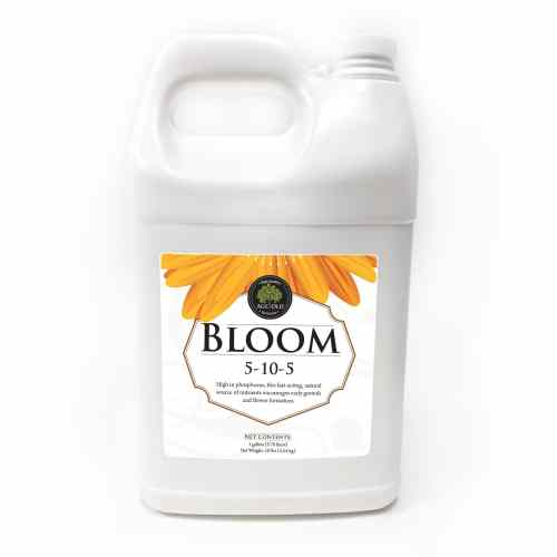 Age Old – Bloom