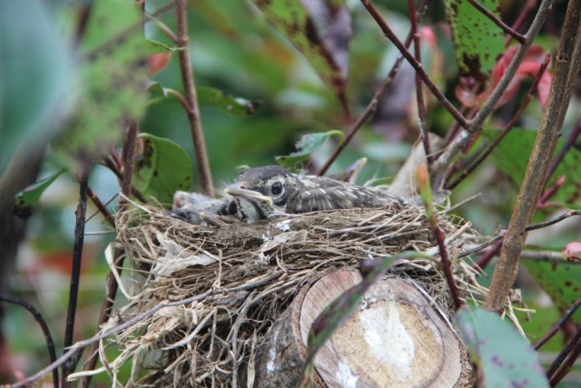 Tiny Featherballs