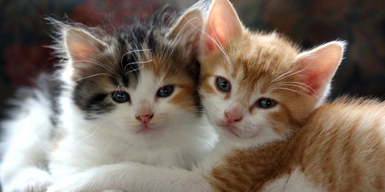 kittens slider