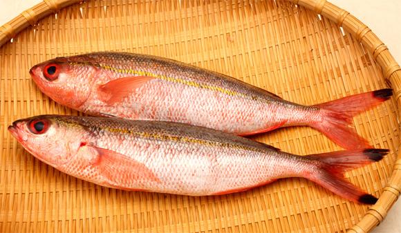沖縄県魚グルクンたかさご