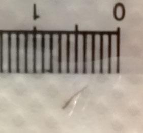 ウロコムシの剛毛