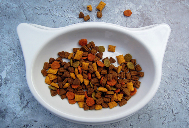 cat food can go in with food waste