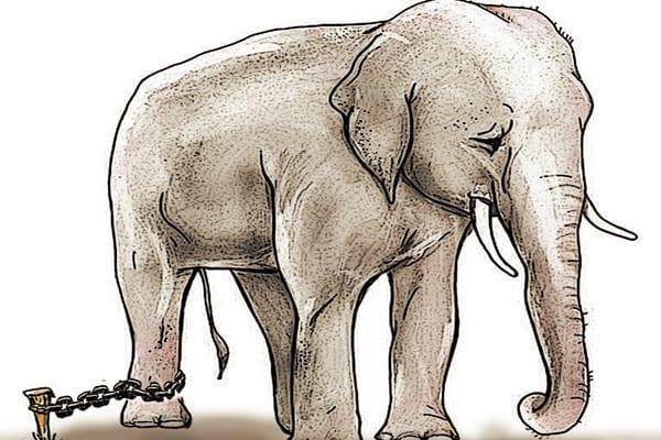 modelos y creencias limitantes - la parabola del elefante