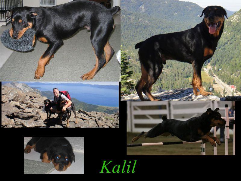 kalil_collage