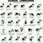 Lær at forstå din hund – Hundesprog