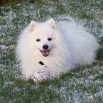Dårlige vaner og hvorfor jeg IKKE er den perfekte hundeejer