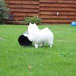 Hundehvalpens legetøj