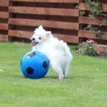 Stress blandt hunde – Stress under leg