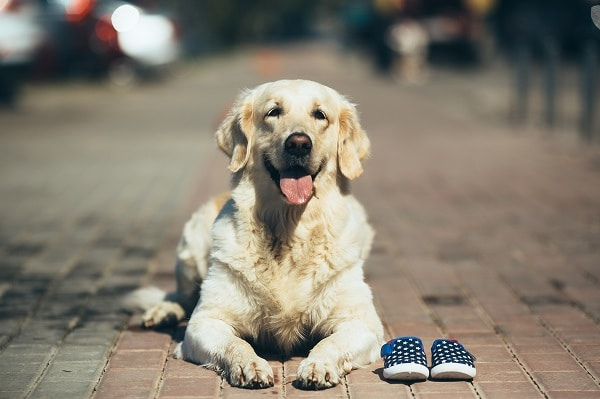 Medical Conditions That Dogs Can Sniff Out