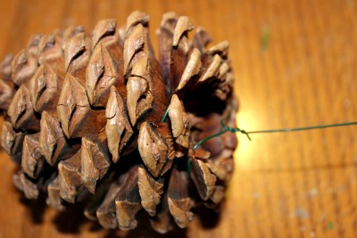 Pine cone with floral wire attached for securing to wreath.