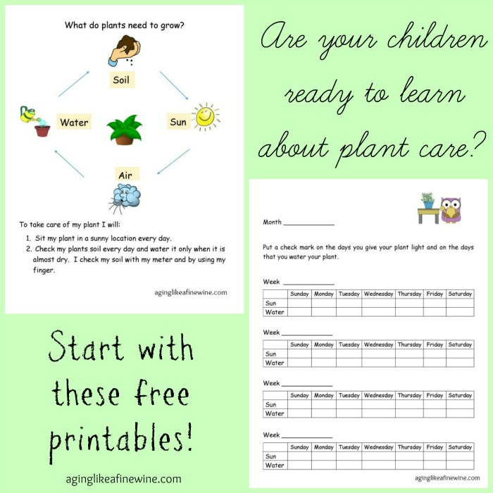 Plant care printable