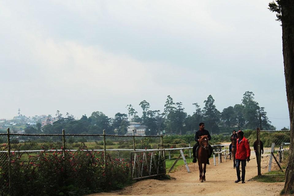 horse riding at the royal turf club nuwara eliya sri lanka english town