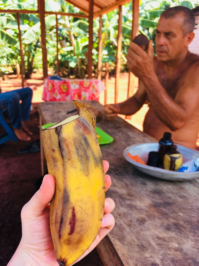 a visit in fruit farm with cuban banana