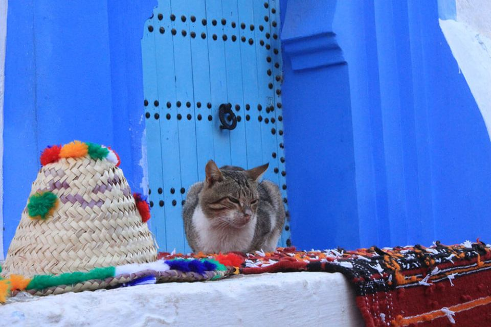 cat sitting relaxing blue door chefchaouen morocco blue city_agirlnamedclara