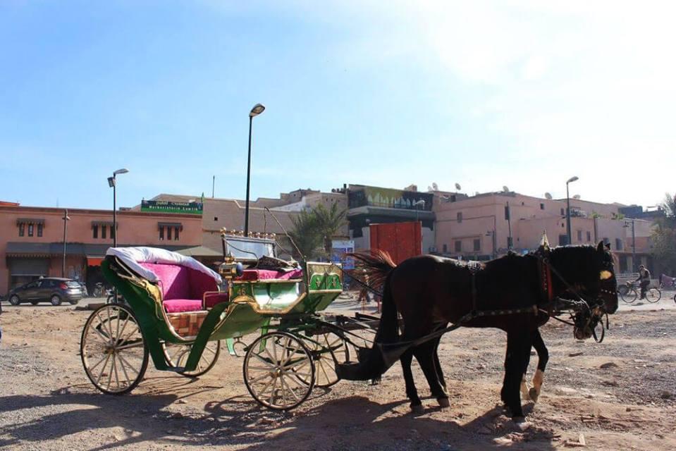 Marrakech souk Morocco horse carriage