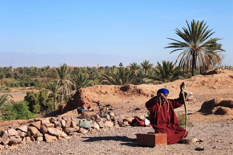 snake charmer morocco blue sky background palm tree agirlnamedclara