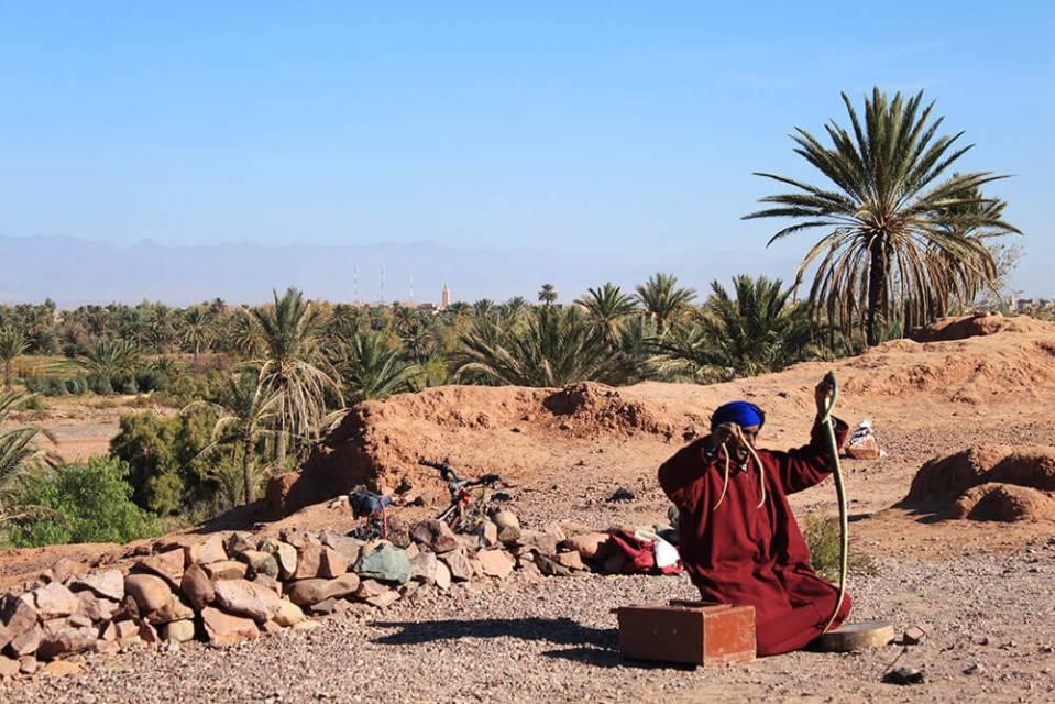 snake charmer morocco blue sky background palm tree agirlnamedclara