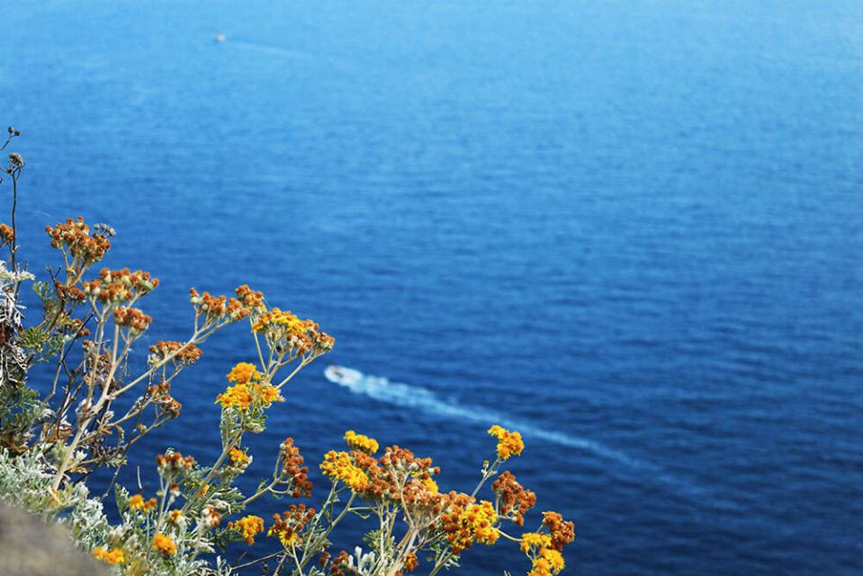 yellow flowers at the cliff blue sea cinque terre italy agirlnamedclara