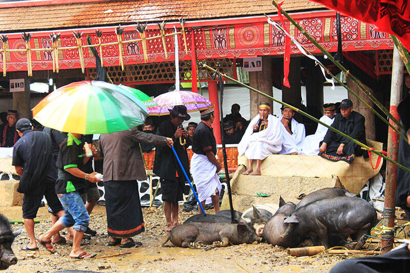 men with umbrellas point at pig put mark in rain rambu solo funeral ceremony toraja_agirlnamedclara