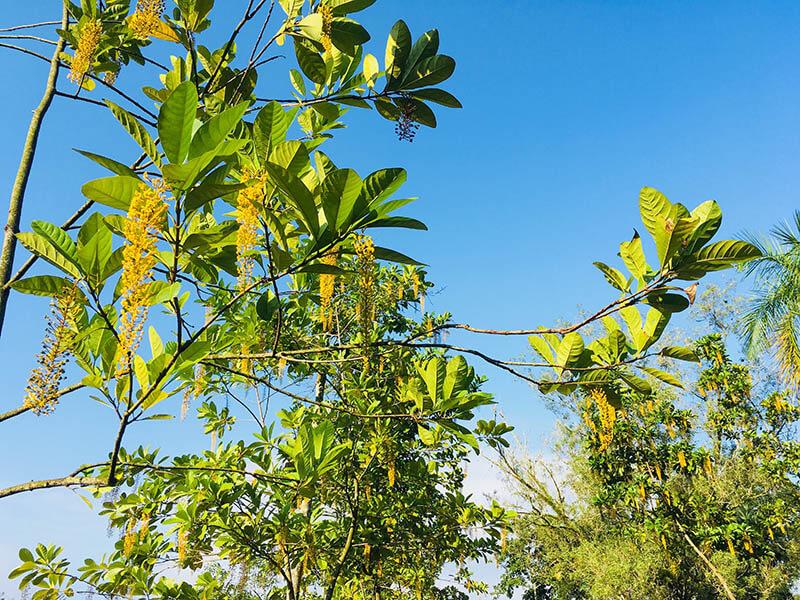 yellow flower blue sky backgrond nature taman bukit kiara_agirlnamedclara