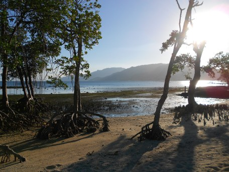 mangroves at the beach front