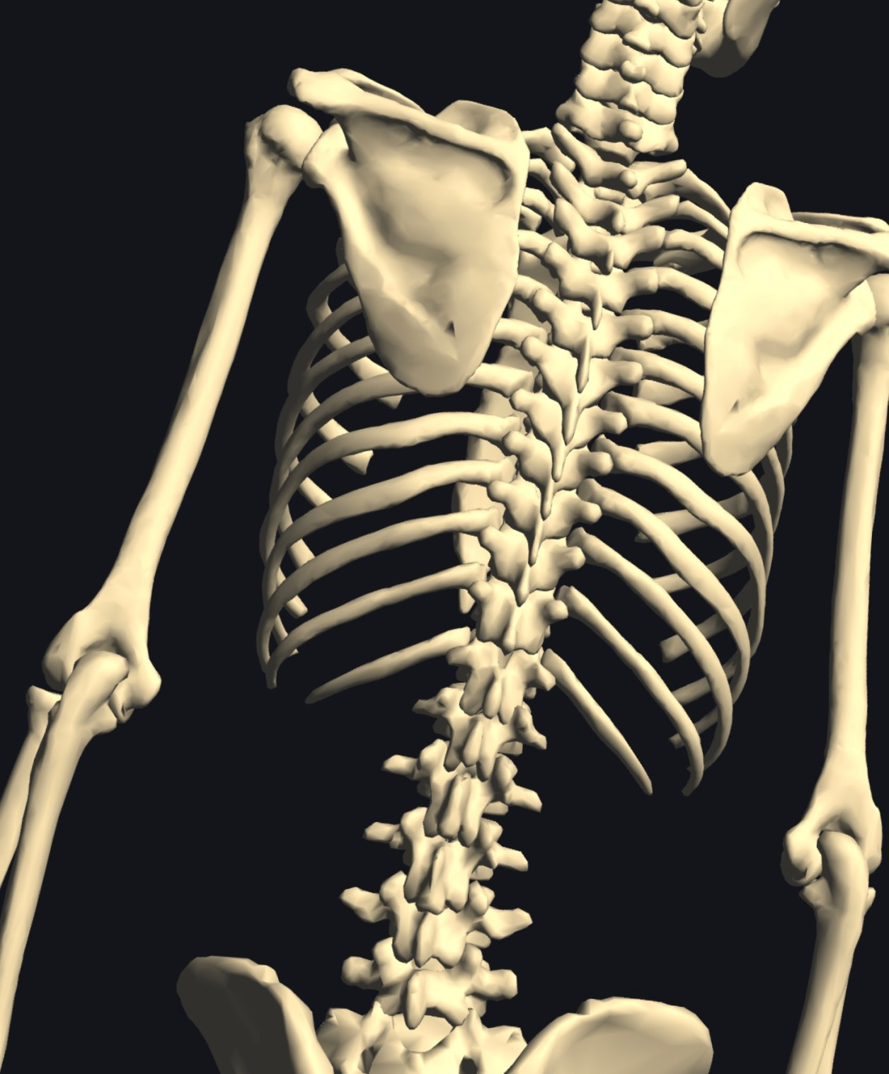 回旋側屈 骨モデル