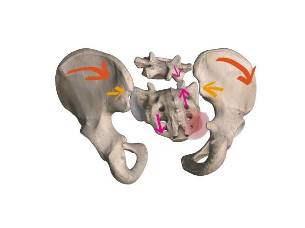 腸骨・仙骨・第五腰椎