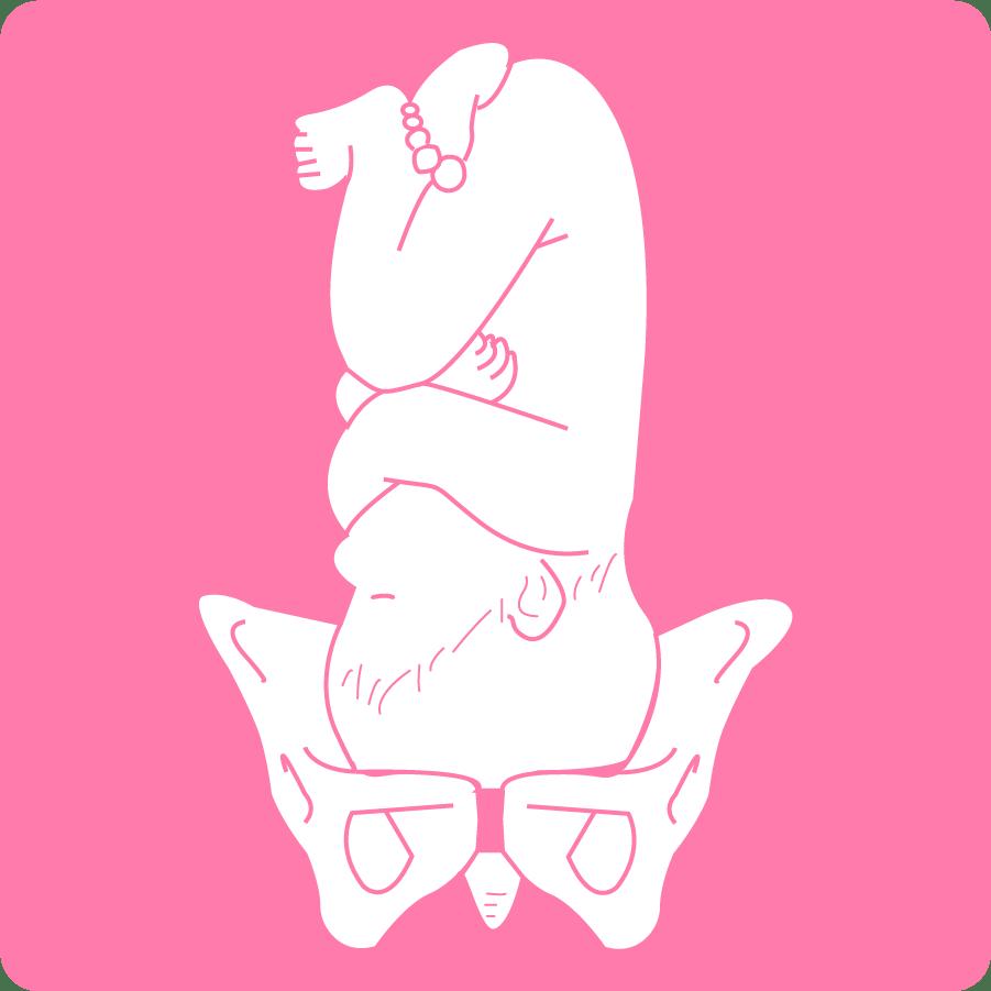 出産時の胎児の回旋イラスト