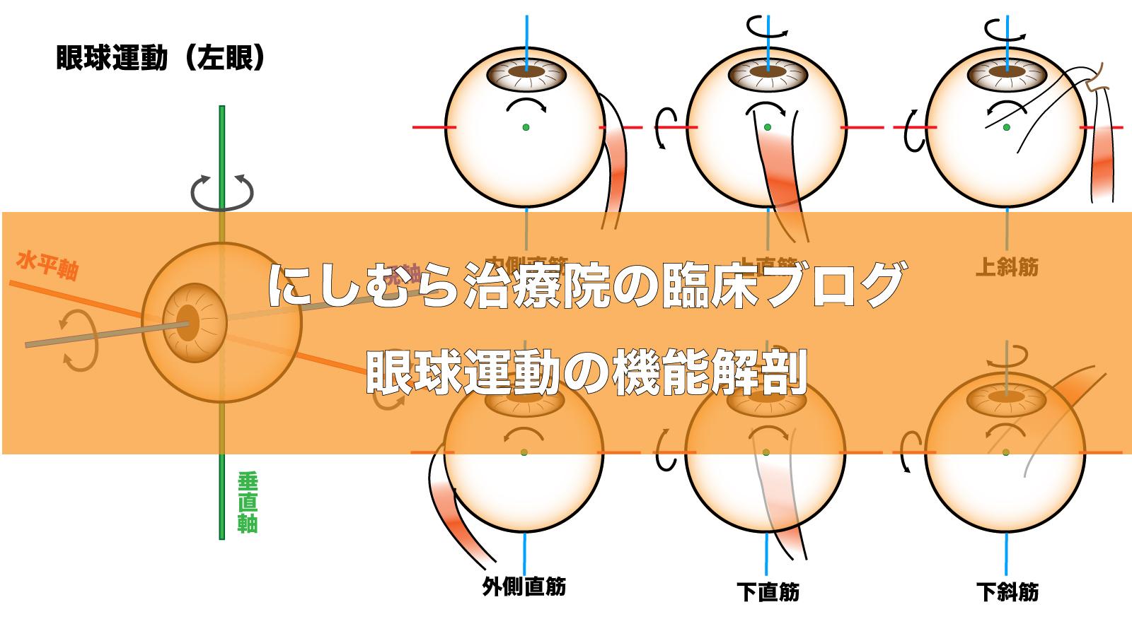 眼球運動の機能 タイトル