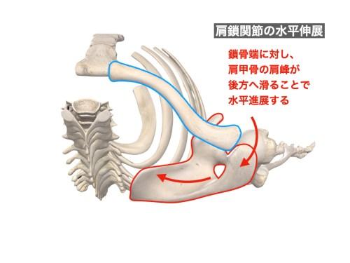 肩鎖関節の水平伸展