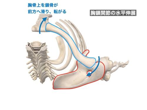 胸鎖関節の外転(水平伸展)