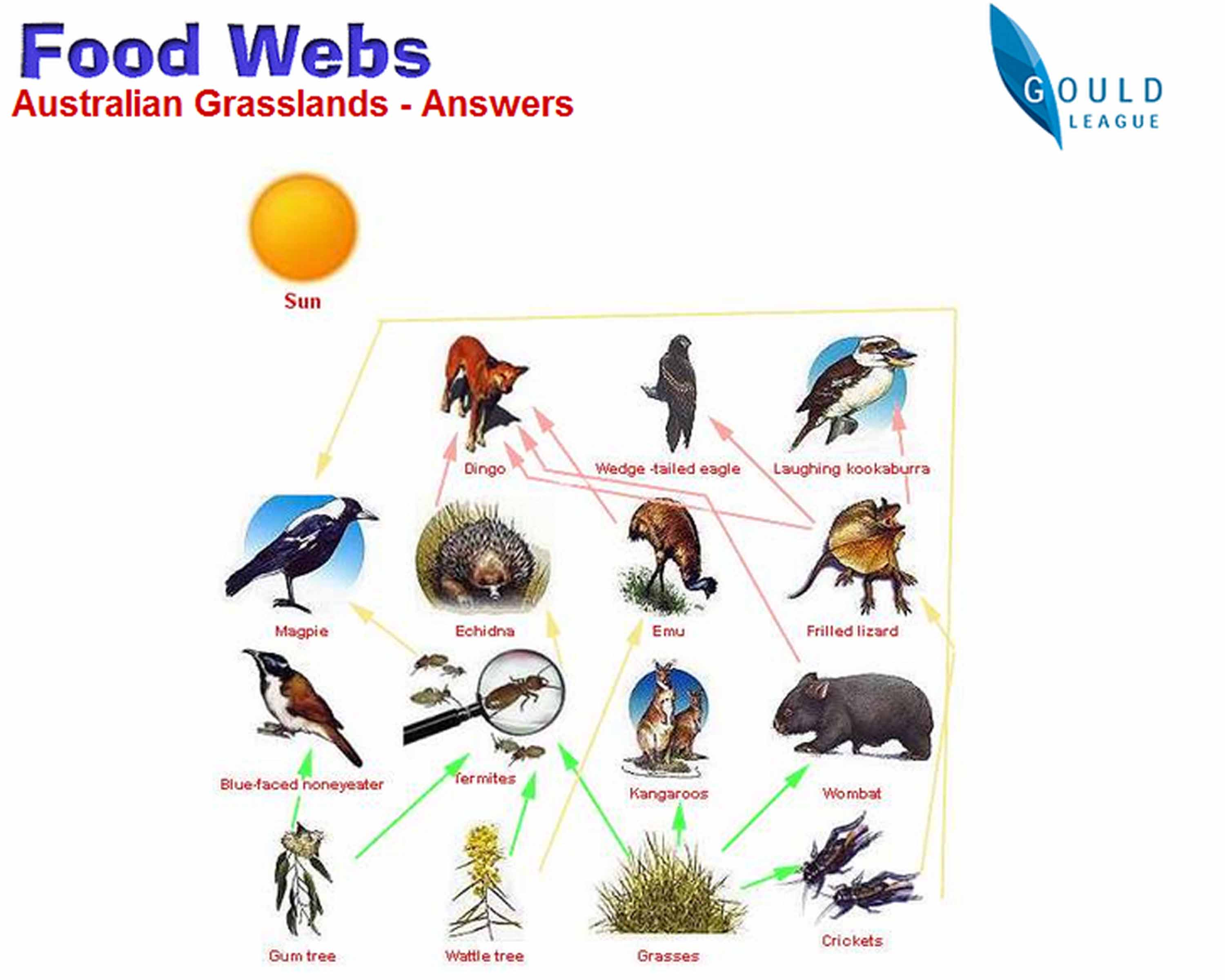 Post 6 Food Webs A Gittner