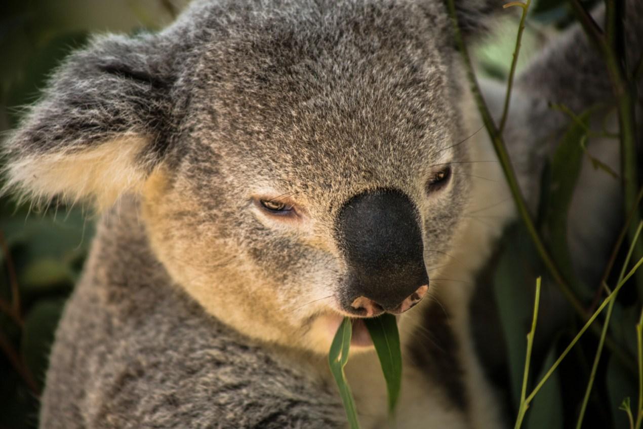 Taronga Zoo NSW Australia