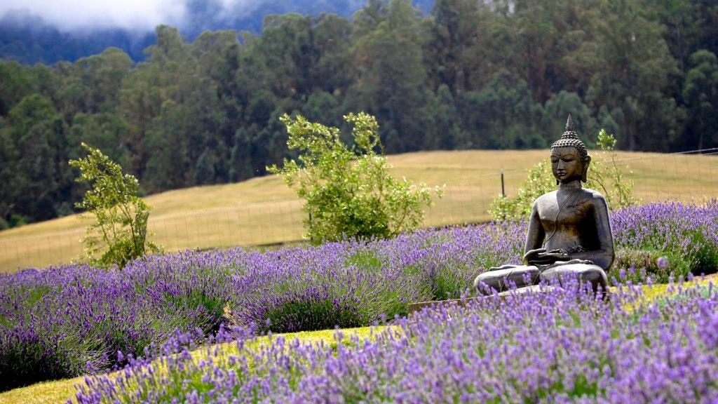 Alii Kula Lavender Farms