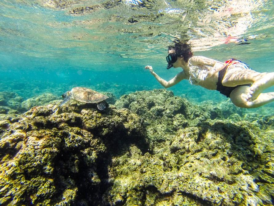 Swim with turtles hawaii