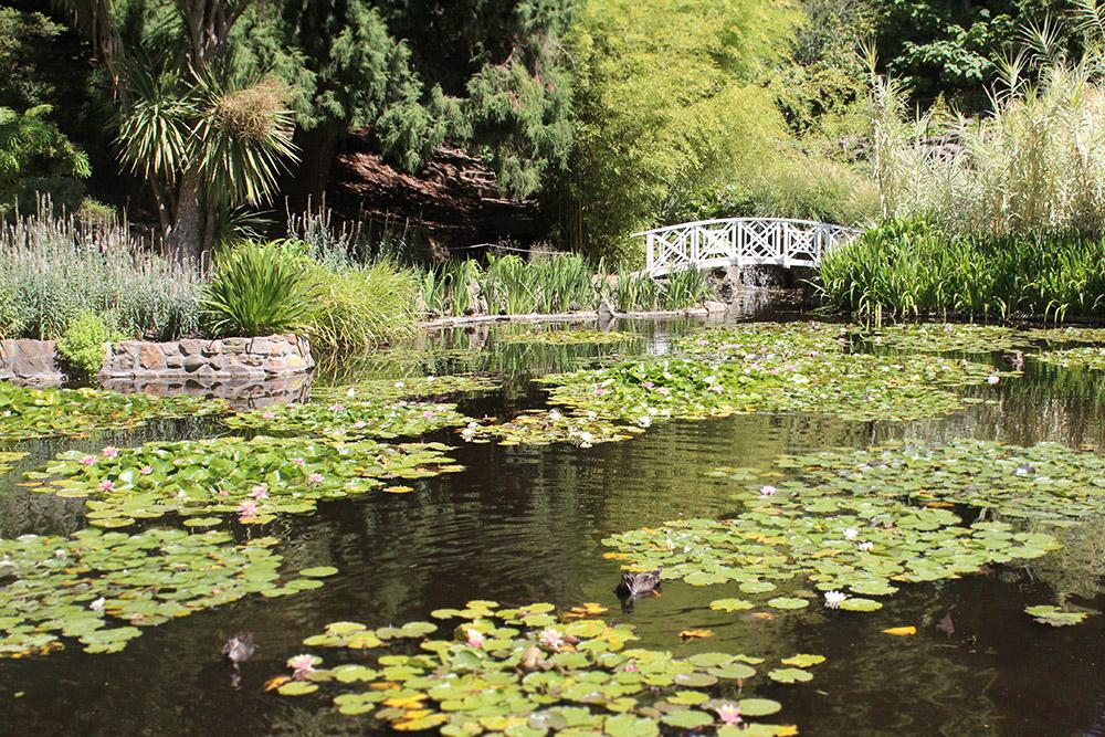 Hobart's Royal Botanic Gardens