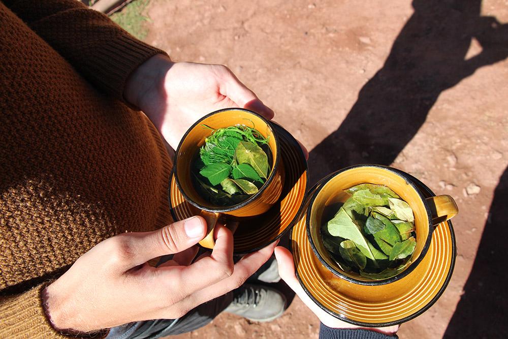 Coca Tea, Peru