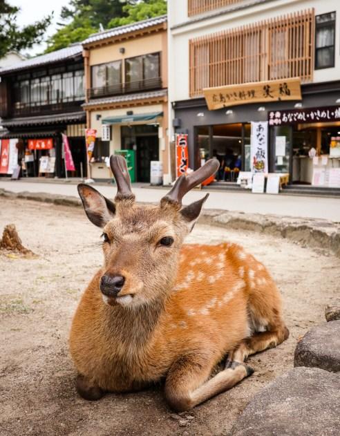 Deer, Miyajima, Japan