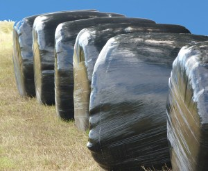 Silage_bales